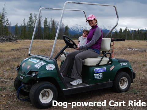 A cart pulled by huskys at Dog Sled Rides of Winter Park.